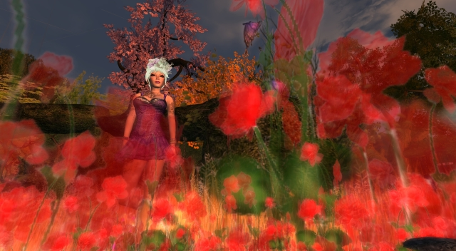 lilac11_001